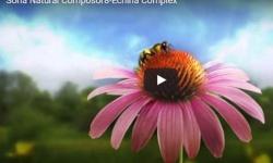 Soria Natural Composor 8-Echina Complex