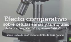 Efecto comparativo sobre células sanas y tumorales de la preparación del Lepidium Latifolium L.