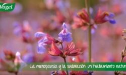 Menopausia: remedios naturales para los sofocos