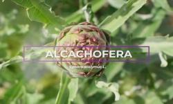 ¿Conoces la alcachofera y sus propiedades?, por Soria Natural