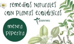 Menta piperita, digestiva y estimulan la producción de bilis, por Equisalud